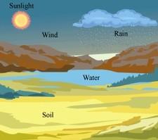 Abiotic factors of environment